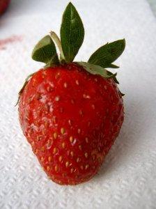 strawberry_sv400131
